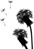 Two dandelion silhouettes Stock Images
