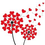 Two dandelions heart shaped over white Stock Image
