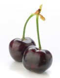 Two dark cherries on white Royalty Free Stock Images