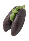 Two dark purple eggplant. Green line,with green Basil, sprayed water, white background, isolated Stock Image