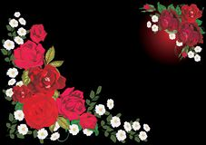 Two dark red rose corner Royalty Free Stock Image