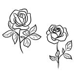 Two roses on white Stock Image