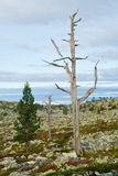 Two dead trees Royalty Free Stock Images