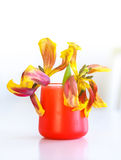Two dead tulips in red vase Royalty Free Stock Photo