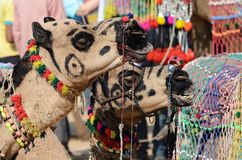 Two decorated tribal nomad camels at cattle festival,India Stock Photo