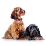 Two decorative doggies. Stock Photo