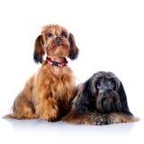 Two decorative doggies. Stock Photos