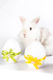 Two decorative eggs with bunny. A white bunny sitting behind two eastern eggs Stock Photos