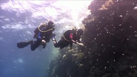 Two deepwater scuba divers swimming near coral reefs underwater in Red sea. World of colorful beautiful wildlife of reefs and algae. Relax and privacy. Abyssal stock video
