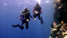 Two deepwater scuba divers swimming near coral reefs underwater in Red sea. World of colorful beautiful wildlife of reefs and algae. Relax and privacy. Abyssal stock footage