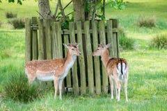Two deer standing Stock Photo