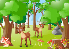 Two deers in the forest Royalty Free Stock Photo