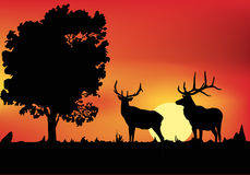 Two deers near tree at sunset Stock Images