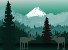 Two deersin dark mountain forest. Illustration with deers in forest Stock Photo