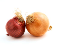 Two delicious onions Royalty Free Stock Image
