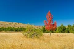 Two detached birches on Ai-Petri mountain tableland in Crimea. N peninsula at fall season stock images