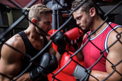 Two determined men boxing behind the netting Stock Images