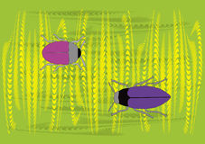 Two different color bugs in wheat. Vector illustration Stock Photo