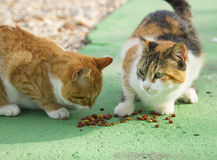 Two different color cats eating cat food Stock Photos