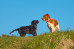Two different color dogs Royalty Free Stock Photo