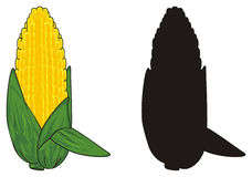 Two different corns Royalty Free Stock Photo