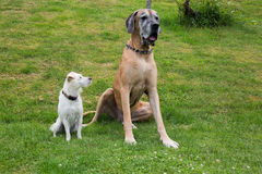 Two different dogs royalty free stock image