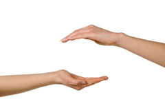 Two different female hands Stock Image