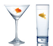 Two different goldfish in two different glass Stock Photos