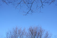 Two different kinds of dry branches against blue sky Royalty Free Stock Image