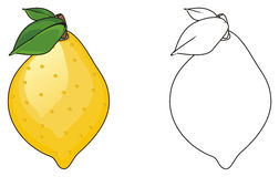 Two different lemons Royalty Free Stock Photography