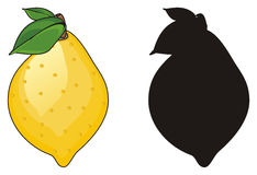 Two different lemons Royalty Free Stock Image