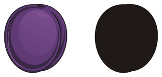 Two different plums. Colored plums and solid black plum Royalty Free Stock Photos