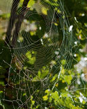 Two different spider nets integrate. Into society in morning dew Stock Photography