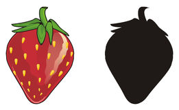 Two different strawberrys Royalty Free Stock Photography