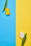 Two different tulips with a copy space Stock Photo