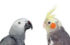 Two differents tropical birds royalty free stock image