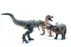 Two Dinosaur Tyrannosaurus Rex attack a Triceratops - white bac Stock Images