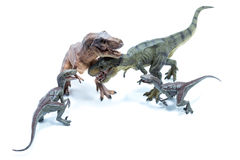 Two Dinosaur Tyrannosaurus Rex and two Velociraptors Raptor figh Stock Photos