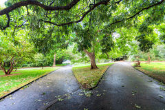 Two diverging paths in a lush green park in Sydney Royalty Free Stock Image