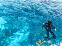 Two divers in black scuba diving suits, a man and a woman with oxygen bottles sink under the transparent blue water in the sea, th stock image