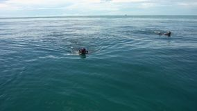 Two divers snorkeling in the deep ocean. A two wide slow motion shot of two men snorkeling on the blue and deep waters of the ocean stock footage