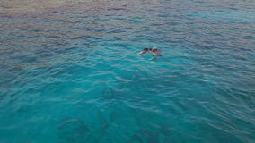 Two divers are swimming in open sea, slow motion. Two scuba divers are preparing to dive stock video