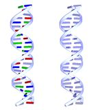 Two DNA structures on white background. Two 3D DNA structures on white background Royalty Free Stock Photos