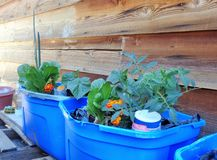 DIY Do-It-Yourself Self-Watering Plant Containers stock photo