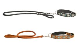 Two dog collar with leash Royalty Free Stock Images