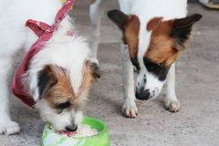 Two dog are eating. Dog is waiting another eat some food Royalty Free Stock Image