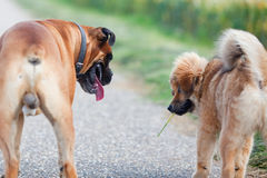 Two dog friends on the road Royalty Free Stock Photo