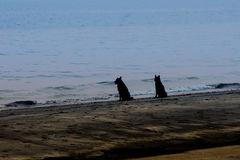 Two dog looking at the sea in a tropical beach Stock Images