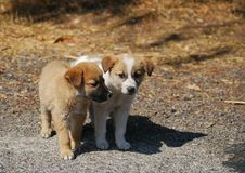 Two dog puppies. Close together stock photography