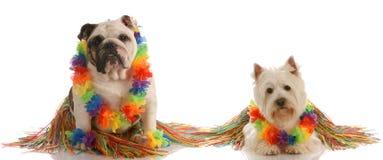 Two dog wearing hula costumes